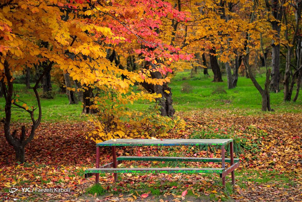 آخرین نفس های پاییز در جنگلهای هیرکانی گلستان