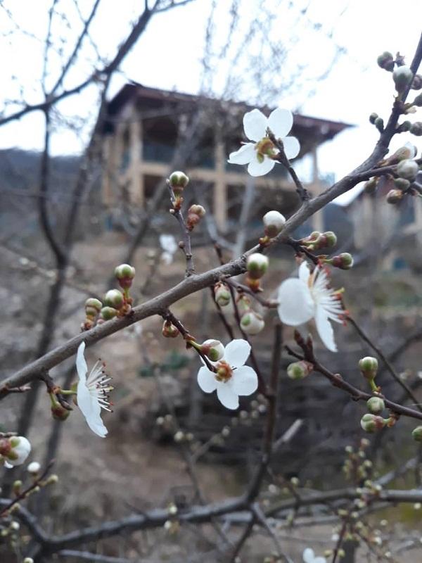 سفرمجازی به روستاهای ییلاقی شهرستان علی آبادکتول/شکوفه های بهاری