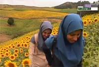 جاذبه های گردشگری استان گلستان در یک نگاه (پارت دوم)