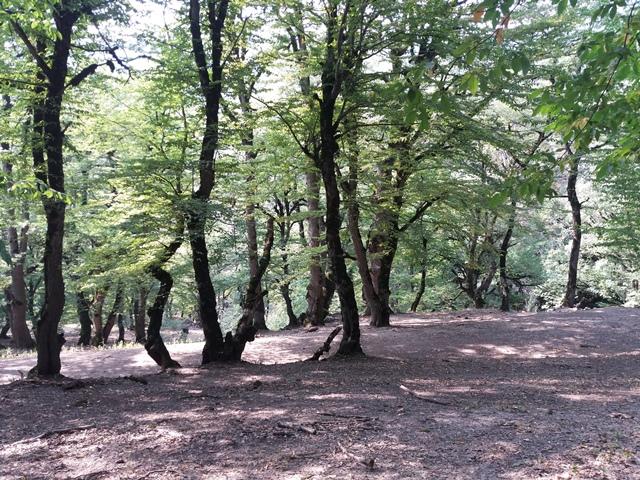 جنگل زیبای پاکندس/فارسیان/گالیکش